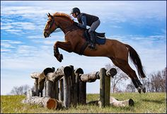 Most Beautiful Animals, Beautiful Horses, Horse Girl, Horse Love, Cross Country Jumps, English Riding, Horse Drawings, Horses For Sale, Horse Photos