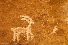 A deer carved by Fremont People rock art petroglyph (prehistoric rock carving dated 600-1300 AD) in the Douglas Creek Canyon south of Rangely, Colorado, USA on Bureau of Land Management (BLM) public lands. shows vandalism near the rock carving.