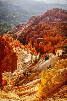Cedar Breaks - National Monument - Utah - USA