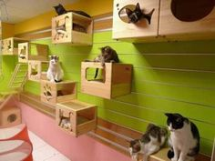 Catswall A Modular Cat Climbing Wall Perfect for Your Pet - most cats are happier when they can sit up high. Crazy Cat Lady, Crazy Cats, Cat Play Rooms, Hotel Pet, Pierrot Costume, Cat Climbing Wall, Cat Room, Cat Condo, Cattery