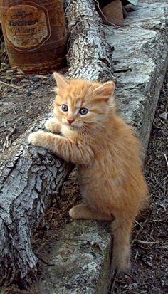 The Kitten Explorer..