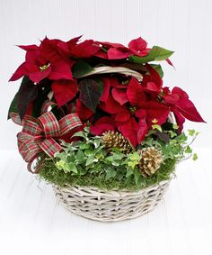 Sturdy willow basket filled with hearty red poinsettias and ivy decked with Christmas trim. A great gift for any home or office. Cut Flowers, Fresh Flowers, White Plains, Flower Shops, Blossom Flower, Green Plants, Flower Delivery, Decking, Merry And Bright