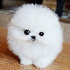 furball cute character - Google Search