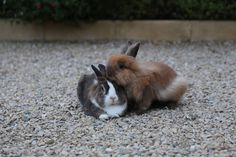 Rabbits - Rongeur - Lapin - Canelle on Yummypets.com