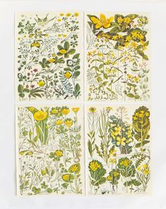 4 yellow flower illustrations - perfect to hang on your walls, framed or unframed... These prints make a lovely gift for any nature lover... These fabulous botanical drawings were rescued from a vintage 1965 copy of 'The Concise British Flora in Colour' by Keble Martin. The