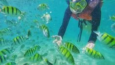 Do you want to swim with the fishes? You can certainly do that at Virgin Island.    Photo by: @marieellizatravels Bantayan Island Cebu, Virgin Islands, Swim, Fish, Pets, Animals, The Virgin Islands, Animales, Animaux