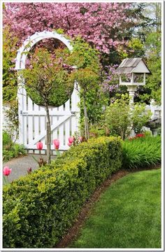 Spring in the Garden at Fishtail Cottage ! With Cottage Garden Tips and Ideas !