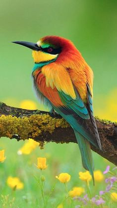 Spectacular Bee-eater!  God must have had a great time designing all the different colored birds and all the different kinds of birds.