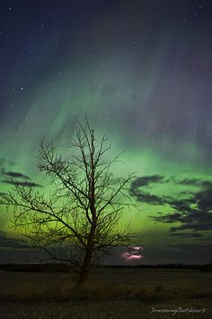 Aurora Borealis seen in Alberta, Canada. Photo by dreaming_outdoors