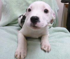 Oregon Humane Society - Adopt - Pet Detail