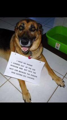 The Funniest Pet Shaming Photos