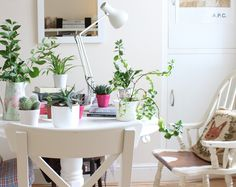 Indoor plant container inspo