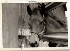 Fab find Wonderful Old Vintage Photograph Gorgeous Black Horse Looking Over Fence #BlackWhite