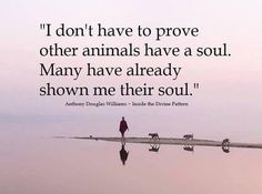 ..animals have a soul