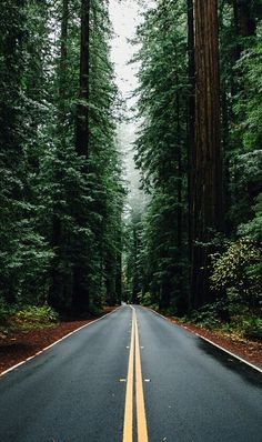 Green Forest Road Tall Trees iPhone 5 Wallpaper – Wallpaper's Page Phone Backgrounds, Wallpaper Backgrounds, Screensavers And Wallpaper, Wallpaper Ideas, Wallpaper Iphone5, Forest Wallpaper Iphone, Mountains Wallpaper Iphone, Wallpaper Iphone Vintage, Green Nature Wallpaper