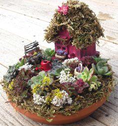 ABC das Suculentas: Jardim em miniatura
