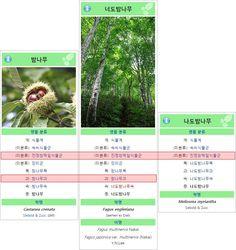 밤나무-너도밤나무-나도밤나무 비교 → http://fb.com/ssennomm/posts/1077543635651855