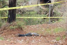 El cuerpo de un hombre hasta el momento en calidad de desconocido fue localizado la tarde de este domingo en una brecha a un costado de la carretera libre Uruapan ...