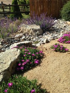 Don't fight Mother Nature, choose plants that thrive in Northern Nevada. Desert Landscaping Backyard, Low Water Landscaping, Landscaping With Rocks, Front Yard Landscaping, Drought Resistant Plants, Drought Tolerant Landscape, Nevada, Oregon Garden, Cool Plants