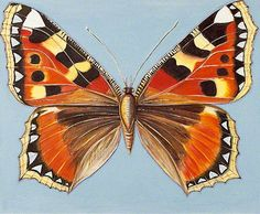 Tortoiseshell Butterfly by Shyama Ruffell http://www.bbc.co.uk/arts/yourpaintings/paintings/tortoiseshell-butterfly-70334