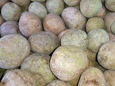 Le Detarium senegalensis un fruit sauvage populaire, très prisé et très apprécié par les Sénégalais est consommé au frais et en jus de fruit. Avec sa forme ronde, sa chaire couverte de pulpe verte très fibreuse et riche en vitamine C, enveloppe son noyau.