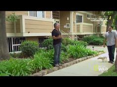 Cesar 911   Season 3 Episode 6   House Arrest - YouTube