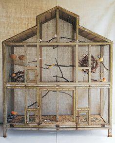 Aviary for pepper aviary birds wild birds pinterest for Oiseau domestique interieur