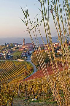 ~Treiso e le Langhe, province of Cuneo, region of Piedmont - Barolo, Italy Places Around The World, Around The Worlds, Monaco, Italy Coast, Piedmont Italy, Portugal, Wanderlust, Regions Of Italy, Northern Italy