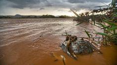 Lama, lágrimas e morte: a jornada de fotógrafo no rio Doce - BBC Brasil