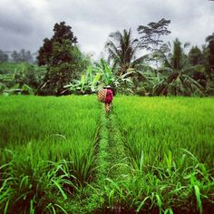 Denpasar, Bali....well, maybe not right in Denpasar, it's the capital city of Bali. #green