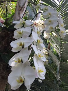 Orchids in the Bronx