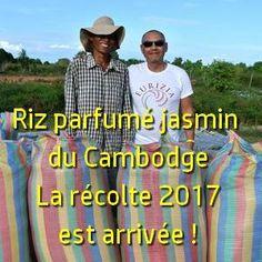 Riz parfumé jasmin du Cambodge : la récolte 2017 est arrivée !