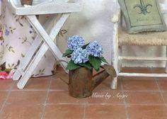 Miniature hydrangeas plant. Blue hydrangea in by MinisbyAngie