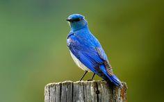 birds hd wallpapers - Buscar con Google