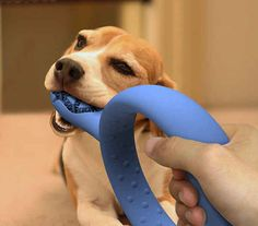 A toothbrush that doubles as a dog toy. | 26 Products You Can't Believe Don't Exist Yet