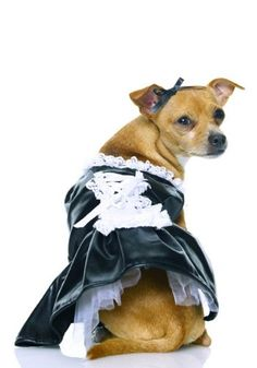 Secret Wishes French Maid Pet Costume Medium *** You can find more details by visiting the image link.