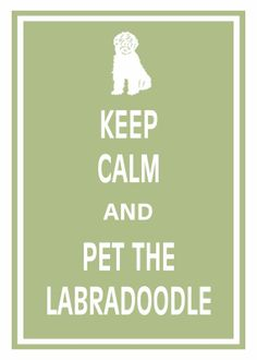 Print PosterKeep Calm and Pet The Labradoodle - 11x17 Poster Buy 1 Get 1 Free Sale Print Poster
