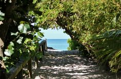 Boca Grande on Gasparilla Island Florida ~ Beautiful Street Gasparilla Island, Places In Florida, Sunshine State, Love Photography, Dolphins, Things To Do, Places To Visit, Wanderlust, Adventure