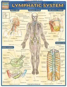 Lymphatic System (Quick Study Academic) by Inc. BarCharts http://www.amazon.com/dp/1572227079/ref=cm_sw_r_pi_dp_-8EStb0K4GPPJMN1  $3.55