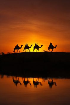 Camels at Desert, Pushkar, India These amazing beasts are ubiquitous in Rajasthan. Beautiful Sunset, Beautiful World, Beautiful Places, Amazing Beasts, Cool Photos, Beautiful Pictures, Belle Photo, Safari, Scenery