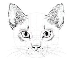 cat draw - Pesquisa Google