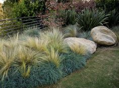 Drought Tolerant Landscape Grasses Recently Added Stout Design Build Los Angeles, CA