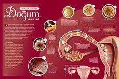 Kadınların kendilerini özel hissettiği bir dönemdir hamilelik.İki boyutlu bir süreç olan gebelikte bedensel ve psikolojikdeğişimler bir arada yaşanır. Hormonlarındaki değişim sebebiylekarmaşık duyguları da karnındaki bebeğiyle birlikte büyütür anneadayları. Zira her anne-babanın gönlünden geçen şeydir bu sürecinsorunsuz bir şekilde atlatılması. Anne adaylarının, bu önemlidönemi daha bilinçli geçirmesine yardımcı olmak amacıylaayrıntılı bir infografik hazırladık. Çalışmamızda 9 ay…