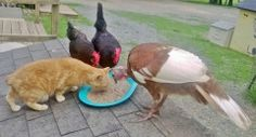 Every meal for every animal, every day, is provided by donations from YOU, our caring supporters! http://www.rikkisrefuge.org/donate.php THANK YOU!