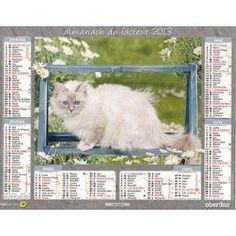 Chat Web, Cat Calendar, Fiction, Cats, Gatos, Cat, Kitty, Fiction Writing, Science Fiction