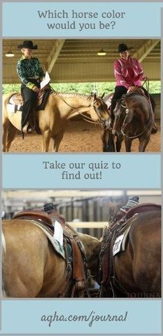 Does your personality match that of a palomino or chestnut? A bay or red roan? Take AQHA's horse coat color quiz to find out!