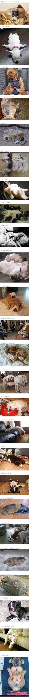 Yup I pretty much love sleeping puppies!