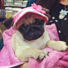 Girly pug. What a little sweetheart!!!
