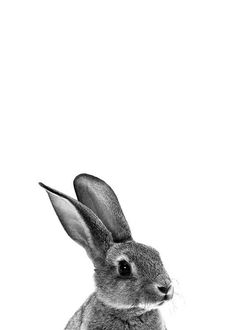 Rabbit Black and White Print