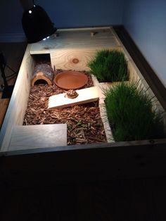 Sulcata Tortoise DIY hatchling enclosure.